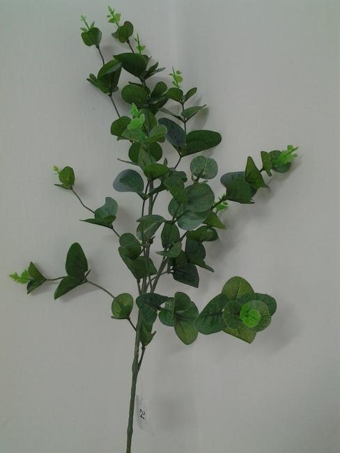 24-ענף אקליפטוס