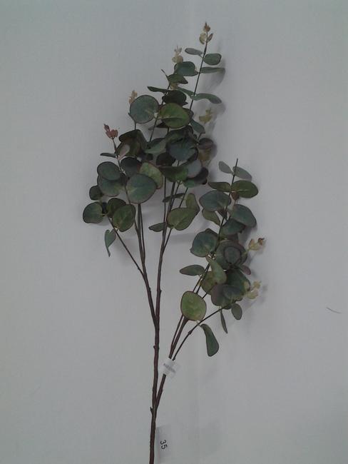 35-ענף אקליפטוס