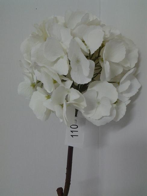 110-אורטנציה לבן