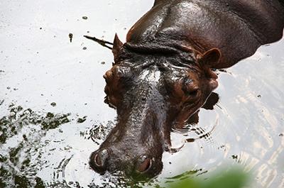 גן החיות דוסיט | Dusit Zoo