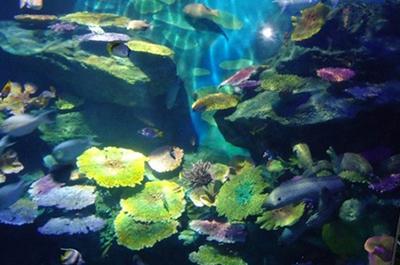 האקווריום של בנגקוק | Sea Life Bangkok Ocean World