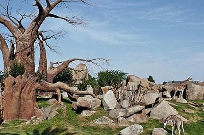 גן החיות של ולנסיה - Bioparc Valencia