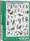 פאזל 1000 חלקים - ציפורי טרף וינשופים