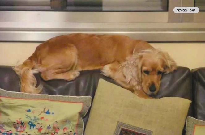 טיפול מתקדם IMT כלב