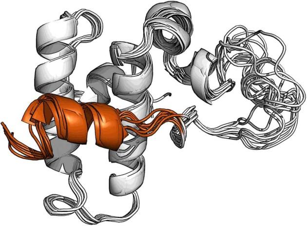 מנעול סלילי (כתום) על השפרון DnaJB1 חוסם את אתר הקישור לשפרונים ממשפחת Hsp70