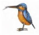 ציפור נוי