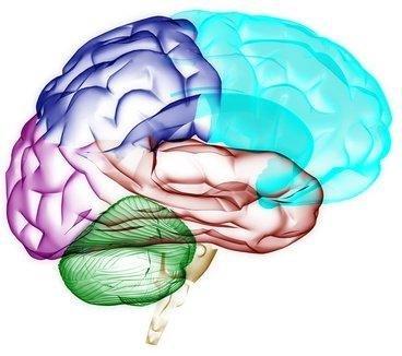 חקר המוח