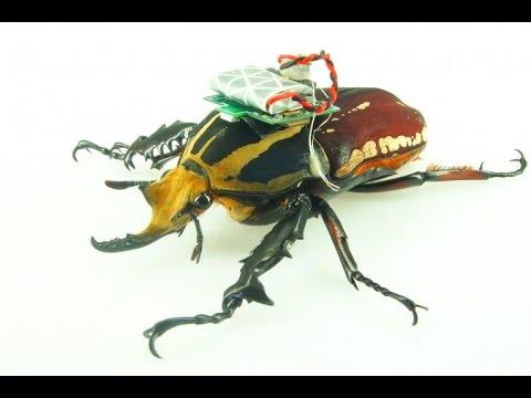 חרק AI