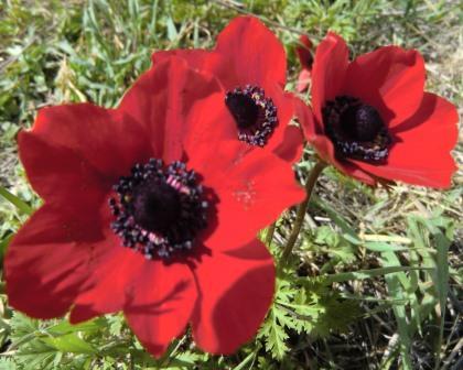 פרחים וברככות