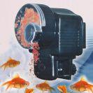 מאכיל דגים