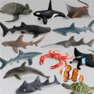 14 סוגי דגים