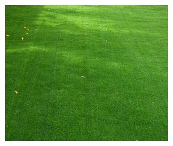 דשא שטיח H8-HOLLY