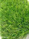 דשא הולי CAMERON