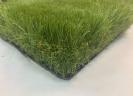 HOLLY- דשא הולי פרמיום