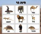 לוח תוכן חיות בר