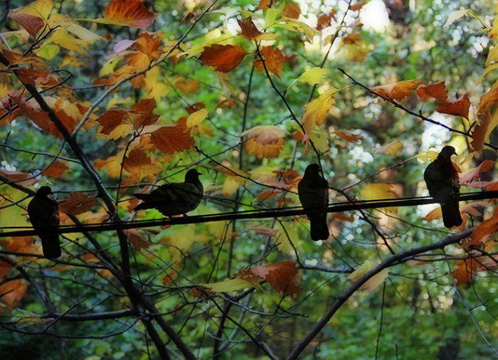 ציפורים ביער - הדפסה קנבס