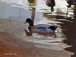 שט באגם - תמונה קנבס