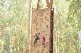 קיר טיפוס אתגרי לילדים וקייטנות ביער בראשית, אטרקציה מצויינת ומאתגרת לכולם