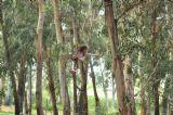 ילדה תלויה באוויר על חבל בפעילות מאתגרת ומדבשת לילדים וקייטנות ביער בראשית