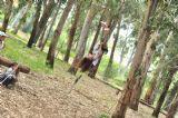 ילדים ביום כיף של קייטנה ביער בראשית, המקום שבו החיוך של הילדים לא יורד והאדרנלין בועט