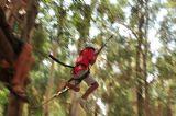 ילדה צונחת על חבל מצמרות העצים, ממש כמו טרזן. יום כיף וגיבוש לקיטנות