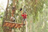 ילדי הקייטנה עוברים מסלול מכשולים הכולל בין היתר גם טיסה חופשית על חבל בין צמרות העצים על אומגה