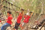 יום גיבוש לילדי הקייטנה, בתמונה ילדים עוברים את אחד המסלולים ביער בראשית, גשר חבלים