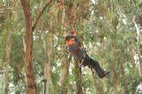 לרחף כמו ציפור בין העצים באתר האטרקציות של יער בראשית, פעילויות והפעלות מיוחדות למתנסים ועובדי המתנסים עם הילדים שלהם