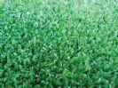 דשא סינתטי - בריכות