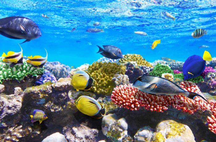 טפט ענק לקיר דגים