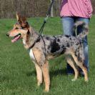 טריקסי איזי ווק רתמת אילוף לכלב XL