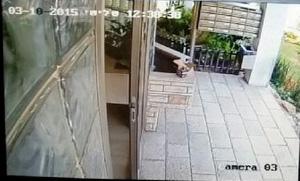 מצלמת אבטחה בחצר