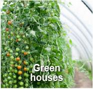 Greenhouses - GBM Cuba