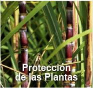 GBM - Protección de Plantas