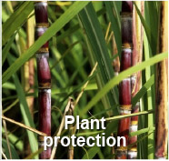 Plant Protection - GBM Cuba