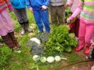 גינת ירק בגן הילדים