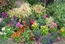 בגינה של הדס/ מירי צללזון