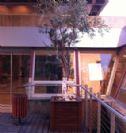 אדנית עץ גראנד 80*80*80גובה