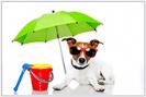 הכן כלבך לקיץ