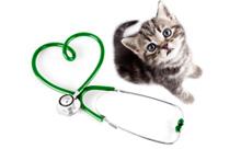 חיסונים לחתולים ומה הם מונעים