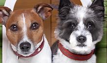 פסיכולוגיה שימושית של מערכת הרביה בכלבה