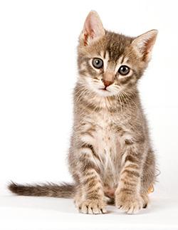 הטסת חתולים