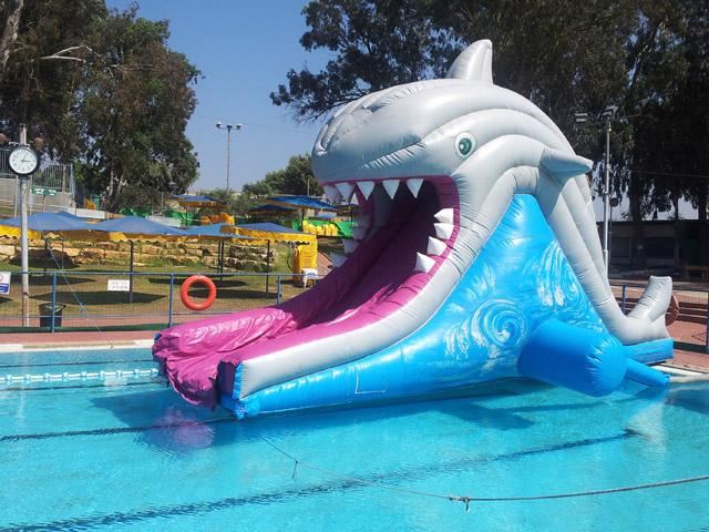 מגלשת כריש