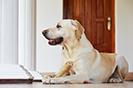 טיפול הידרותרפי בקרב כלבים