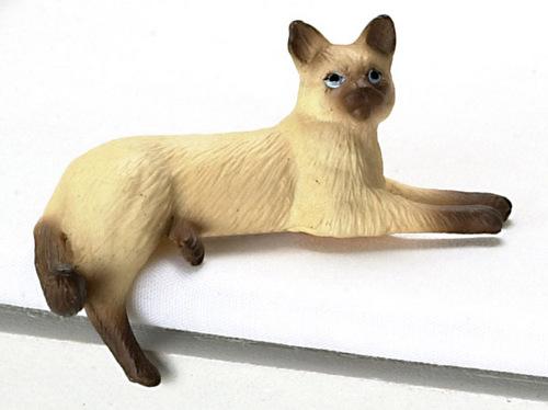 חתול סיאמי מיניאטורי - חום