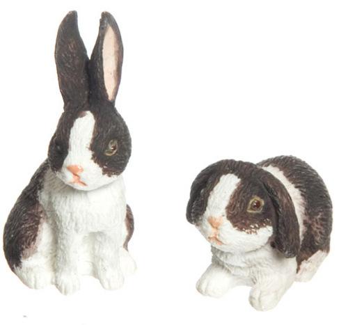 ארנבת מיניאטורית