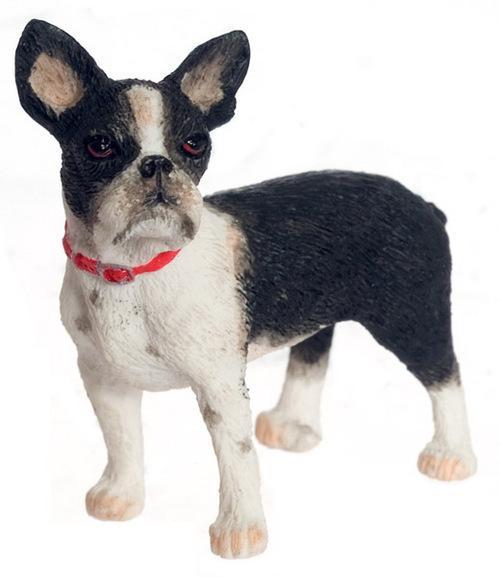 כלב בוסטון טרייר מיניאטורי