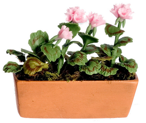 אדנית פרחי גרניום מיניאטורית