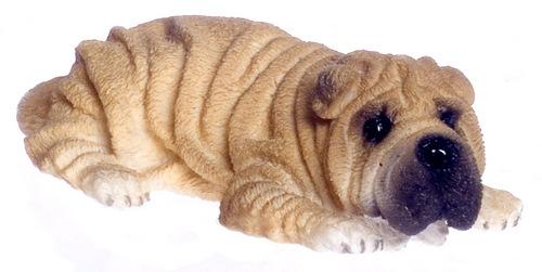 כלב שר-פיי מיניאטורי שוכב