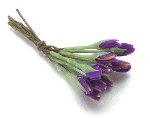פרח איריס מיניאטורי סגול